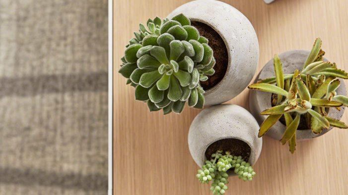 Zasto drzaati biljke u kancelariji? Biofilija...